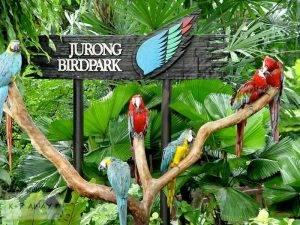 jurong-birdpark_